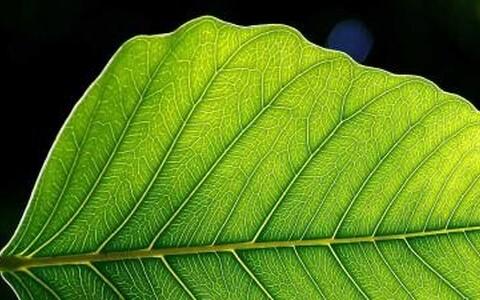 Õhulõhed taimede lehtedel – pole võimatu, et tulevikus üks täpsemate kliimamudelite olulisi aluseid.