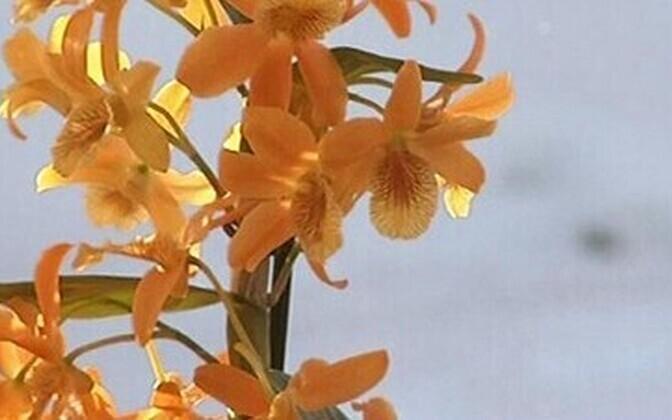 Orhideede keskel muutub rutiinne päev põnevaks seikluseks taimemaailmas.