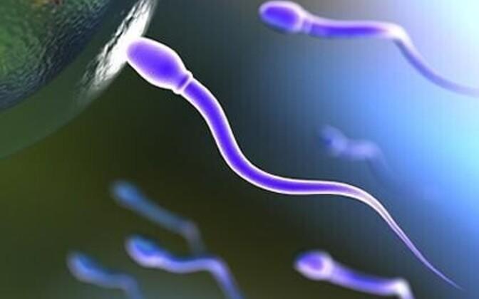Munarakk aitab spermil kiiremini saba liputada