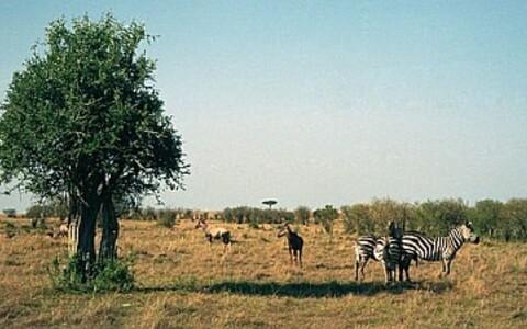 Savann Ida-Aafrikas.