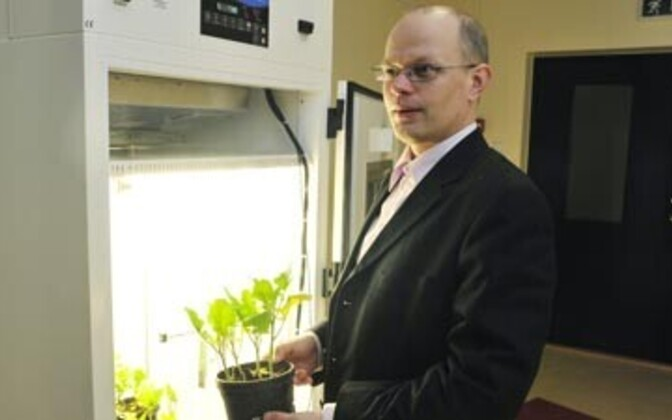 Taimefüsioloogia professor Ülo Niinemets.