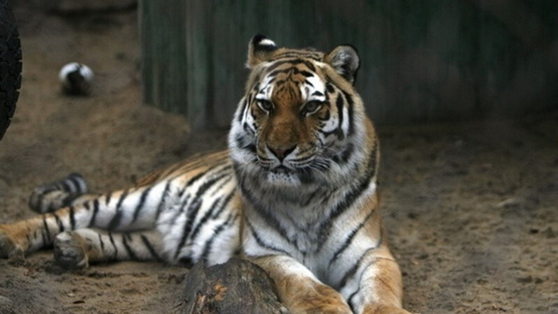 an analysis of animal rights groups The sociological perspective on other animals  mainstream nonhuman animal rights (which includes groups like peta and the humane society of the united states) .
