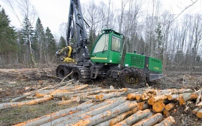 Metsa ülestöötamine.