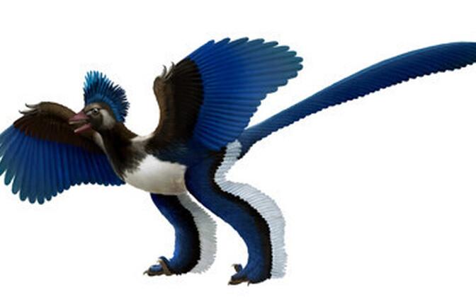 Xiaotingia zhengi muudab põhjalikult lindude põlvnemise sugupuud.