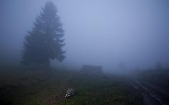 Kategooria 'Loomad keskkonnas'. Äramärgitud foto 'Mäger videvikus', autor Klaus Echle Saksamaalt.