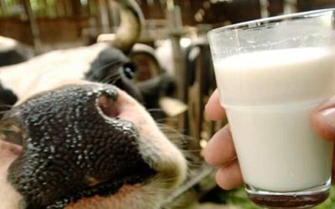 Эстонские производители молочной продукции на Россию пока не жалуются.