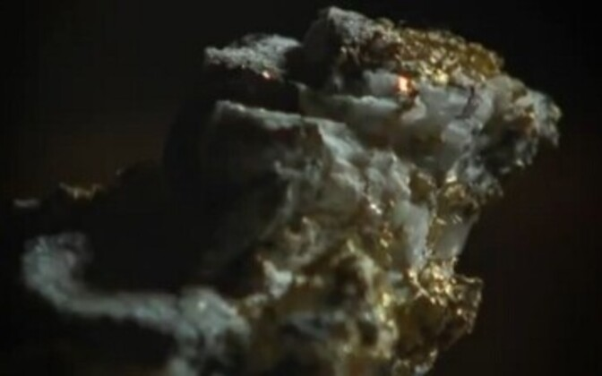 Kuldselt sädelev kullamaak.