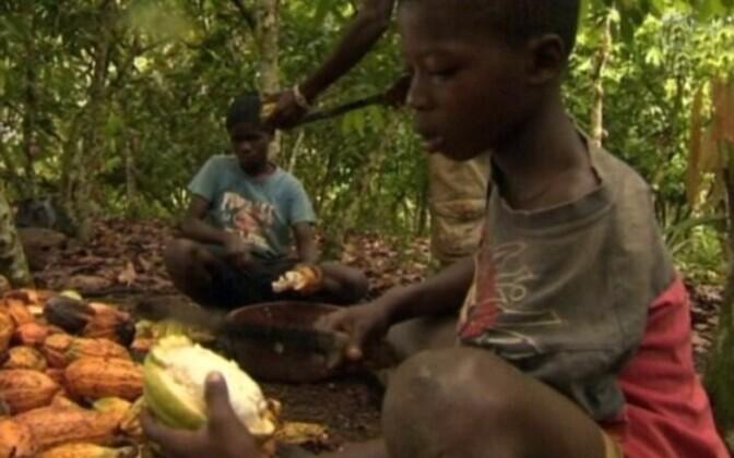 Дети на уборке какао-бобов