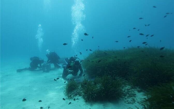 Uurimistööd usside elupaigas Elba saare lähedal