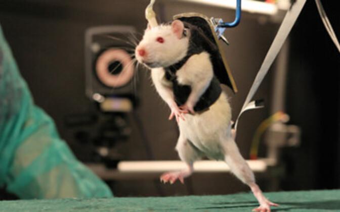 Rott astub julge sammu tulevikku.