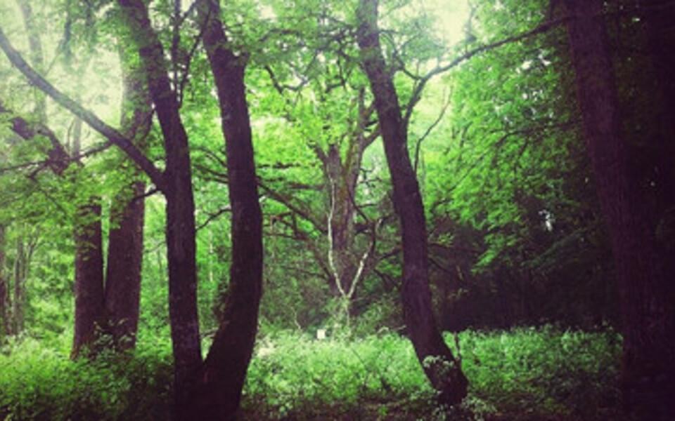 Keskkonnakaitses seadsid vastanud esikohale metsa.