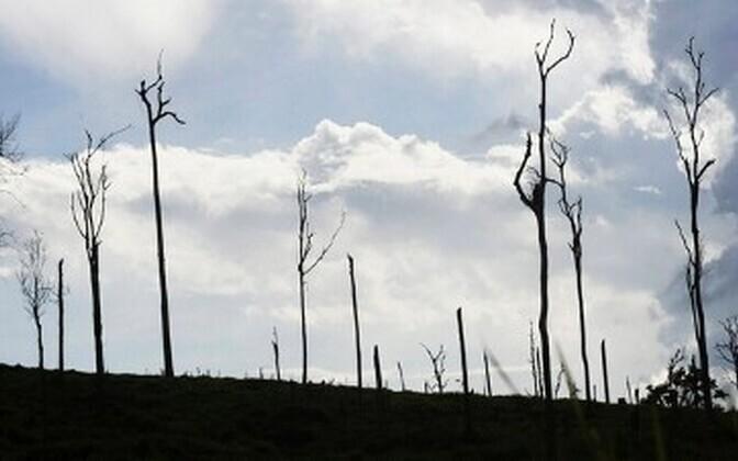 Ebaseadusliku raie tagajärg Amazonase vihmametsas.