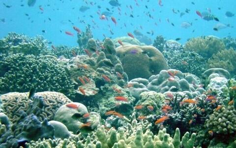 Коралловый риф. Иллюстративное фото.