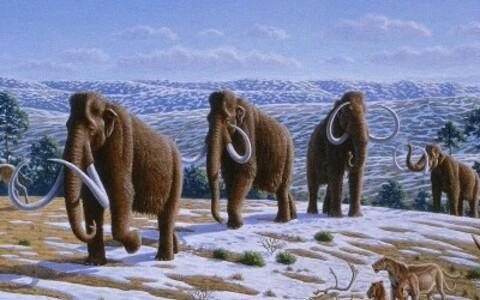 Karvased mammutid.