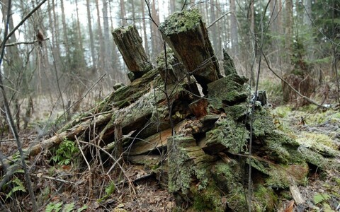 Leftovers of a structure built by the Forest Brothers. Image is illustrative.