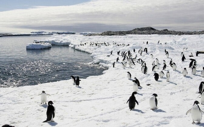 Иллюстративное фото. Антарктида.