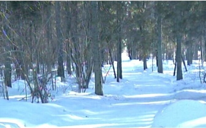 The girl's body was found on a recreational trail near Tamsalu in March 2013.