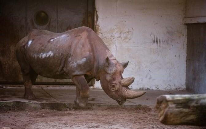 Носорог. Иллюстративное фото.