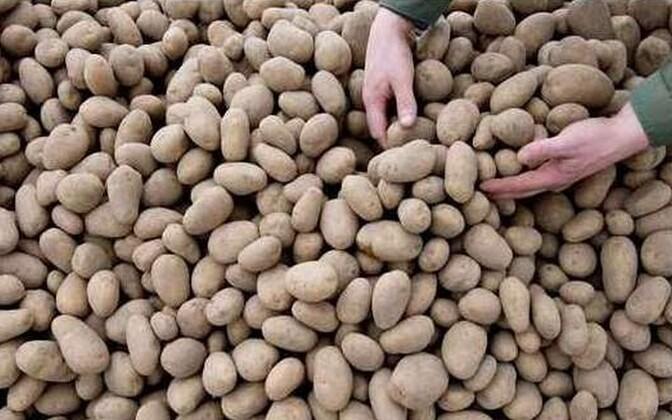 Excessive rainfall last fall led to ruined crops for potato farmers in Estonia.