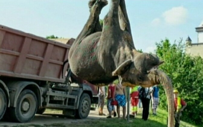 Heavy machinery was used to tow the dead animal away.