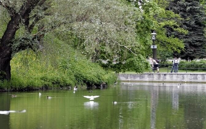 Пруд Шнелли в Таллинне.