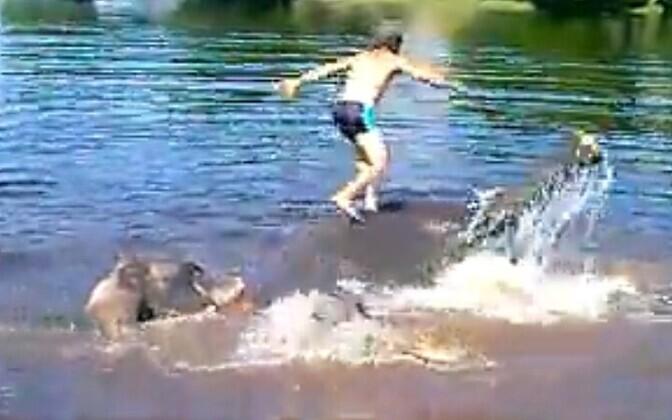 Talitaja elevandi pealt vette hüppamas.