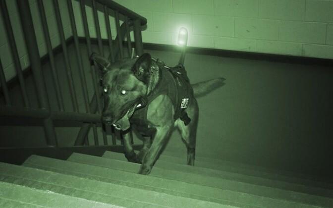 Собака, освещенная приборами ночного видения. Иллюстративное фото.