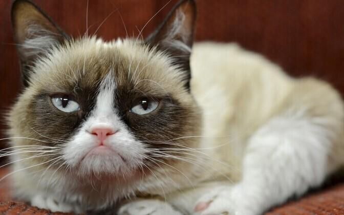 Pahur kass naudib kuulsust.