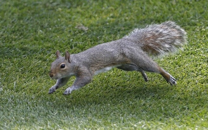 Orav (pilt on illustratiivne)