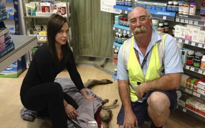 Vabatahtlikud püüdsid loomakese kinni ning nimetasid ta Cyruseks