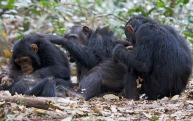 Ka ahvid valivad sõpru sarnaste isiksusomaduste alusel.