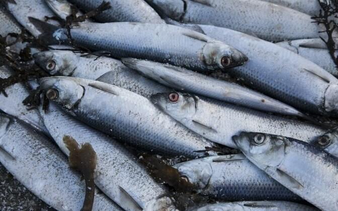 Объединения рыбопромысловой отрасли могут ходатайствовать о субсидиях на улучшение своих производственных процессов и показателей продаж.