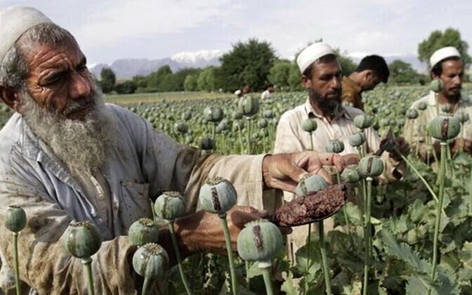 Afganistani talupojad on moonisaagiga rahul.