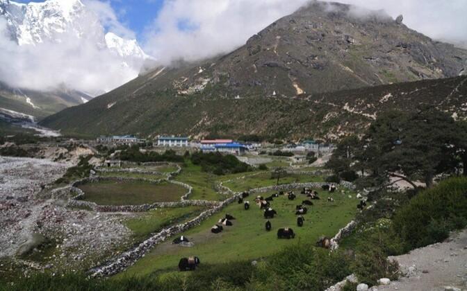 Tiibetlaste geeniproove koguti Thame külast.