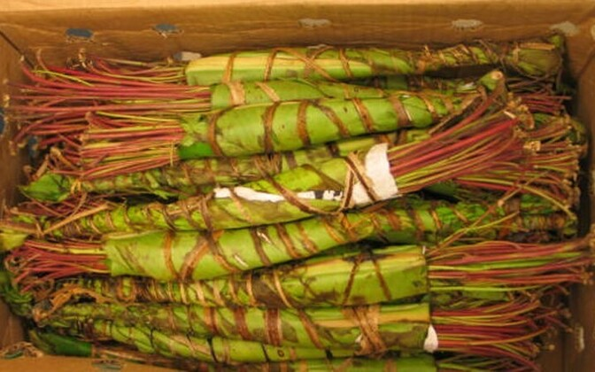Customs Officials Announce Record Khat Bust | News | ERR