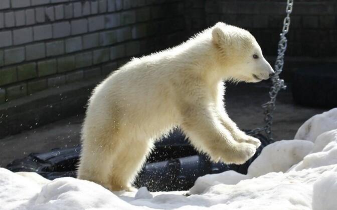 Jääkarutüdruk Nora