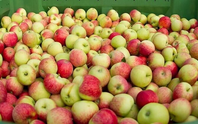 Loomaaiaasukatele toodi õunu üle Eesti