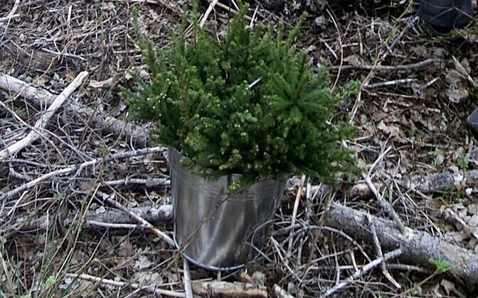 Kui metsaomanik on teinud lageraiet, võiks tal olla kohustus metsa istutada.