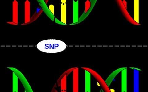 Geneetika oskuslik rakendamine võib avada uusi võimalusi meditsiinis