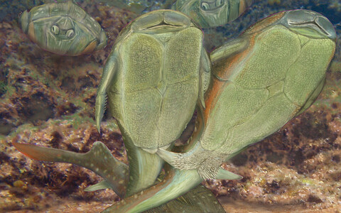 Kunstniku nägemus Microbrachius'e suguühtest.