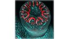 IV koht. Rööviku esijalg, punakad struktuurid kujutavad endas haardekonksukesi. (20X)