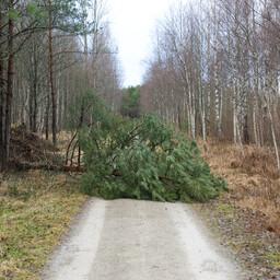 В основном спасателям пришлось убирать упавшие на дорогу деревья.
