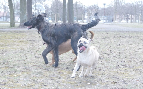 Koerad pargis