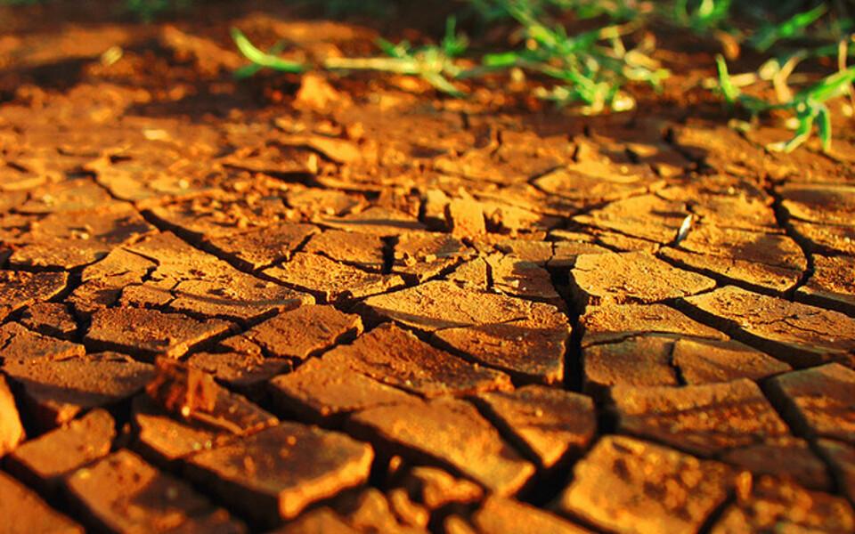 Ühe sentimeetri paksuse viljaka mullakihi tekkeks võib kuluda enam kui 500 aastat.