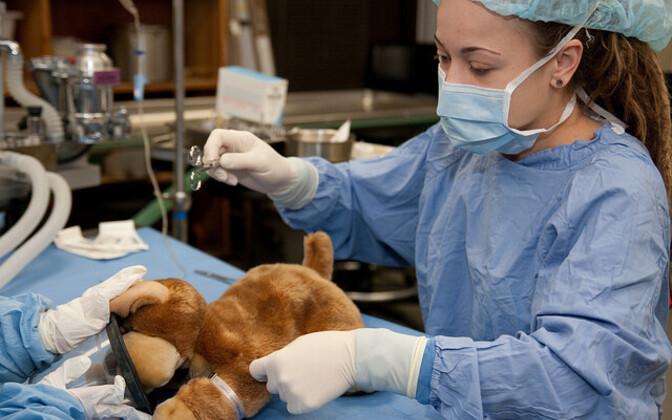 Loomaarstide organisatsioonid lükkavad ümber väited, justkui oleks Eestis vaid paar sertifitseeritud loomaarsti.