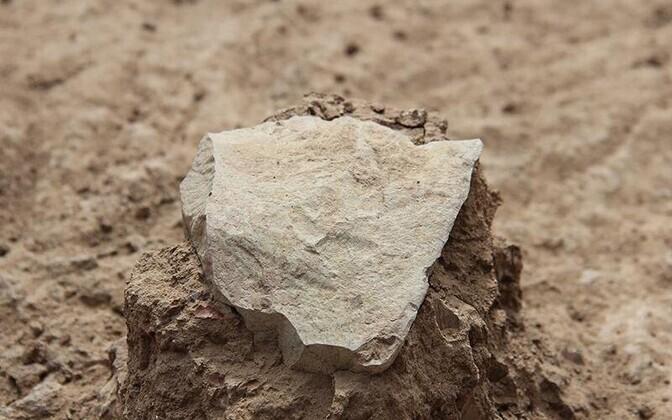 3,3 miljoni aasta vanune kivist tööriist.