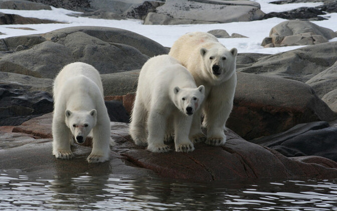 Jääkarud Teravmägedel.