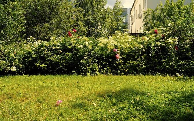 Pidev niitmine võib kahandada elurikkust teie hoovis või aias.
