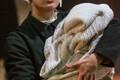 """A. Kitzberg """"Libahunt"""". Lavastaja: Sergei Potapov. Mängivad: Kristiina-Hortensia Port, Liisa Pulk, Mari Lill, Ivo Uukkivi, Piret Simson, Kristo Viiding, Martin Kõiv"""