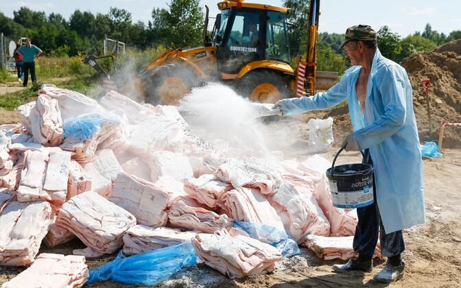 Läänemaise sealiha hävitamine Kaliningradis 2015. aasta augustis.